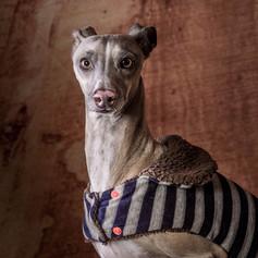 Carlo Dog Photoshoot