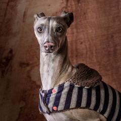 Pet Portrait Photo