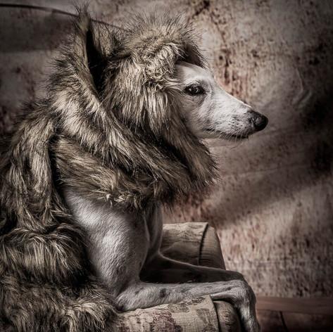Bonnie Dog Photo