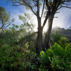 Nature Photography: Mist & Trees
