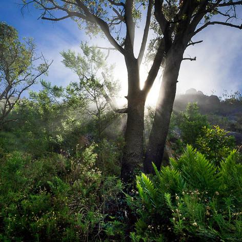 Langeberg Nature Photography
