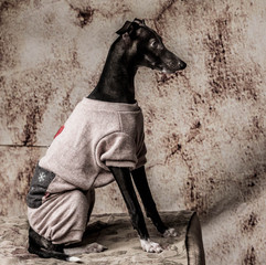 Pet Portraits: Picolo