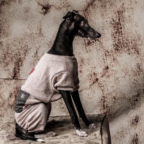 Picolo Dog Portrait
