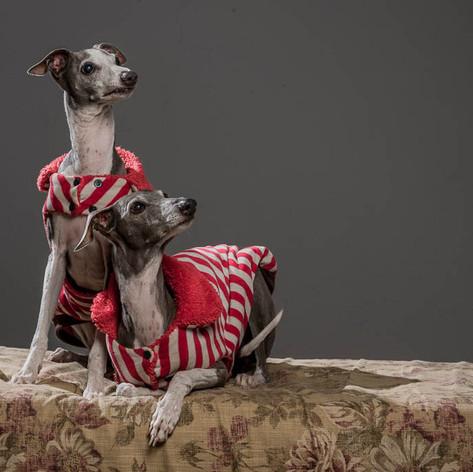 Paparazzi & Lisa Dog Shoot