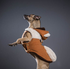 Pet Portrait: Dog Photoshoot