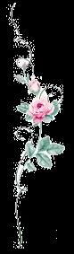 rosa verticaletransparent.png