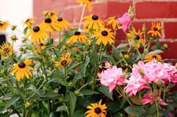 Planting & Garden Design