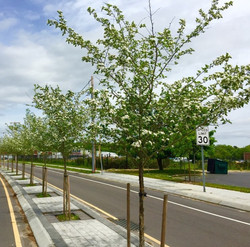 Green Infrastructure Median and Street Design