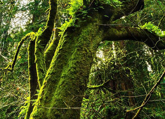 Floresta Viva