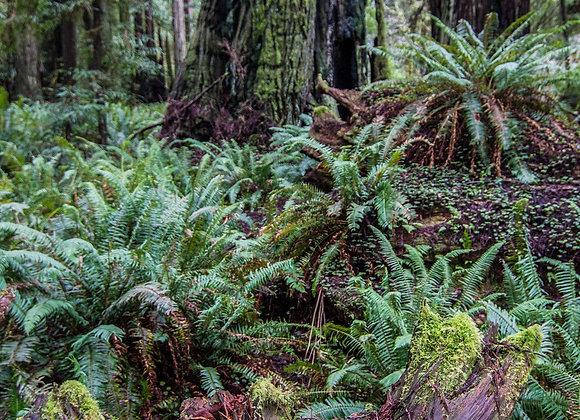 Humboldt Forest