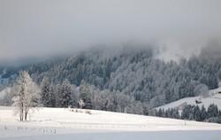 Overnight snow fall, Switzerland