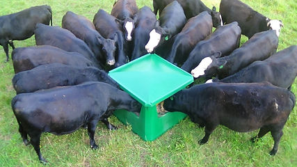 Heifers-Using-Quad-P3-1920x1079.jpg