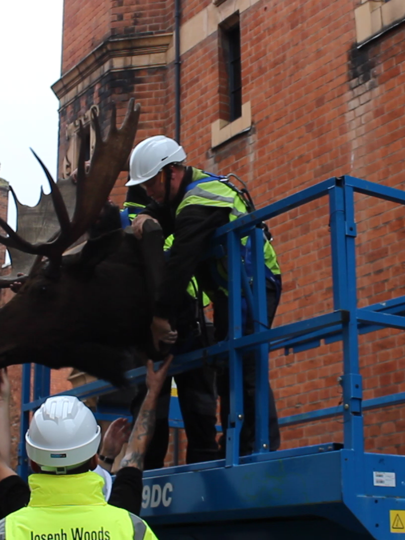 Bringing the moose head out of storage