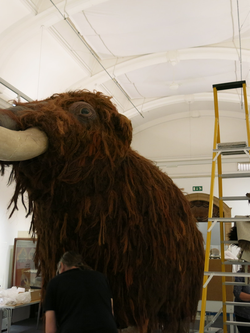 'Fluffy' the mammoth in the museum exhib