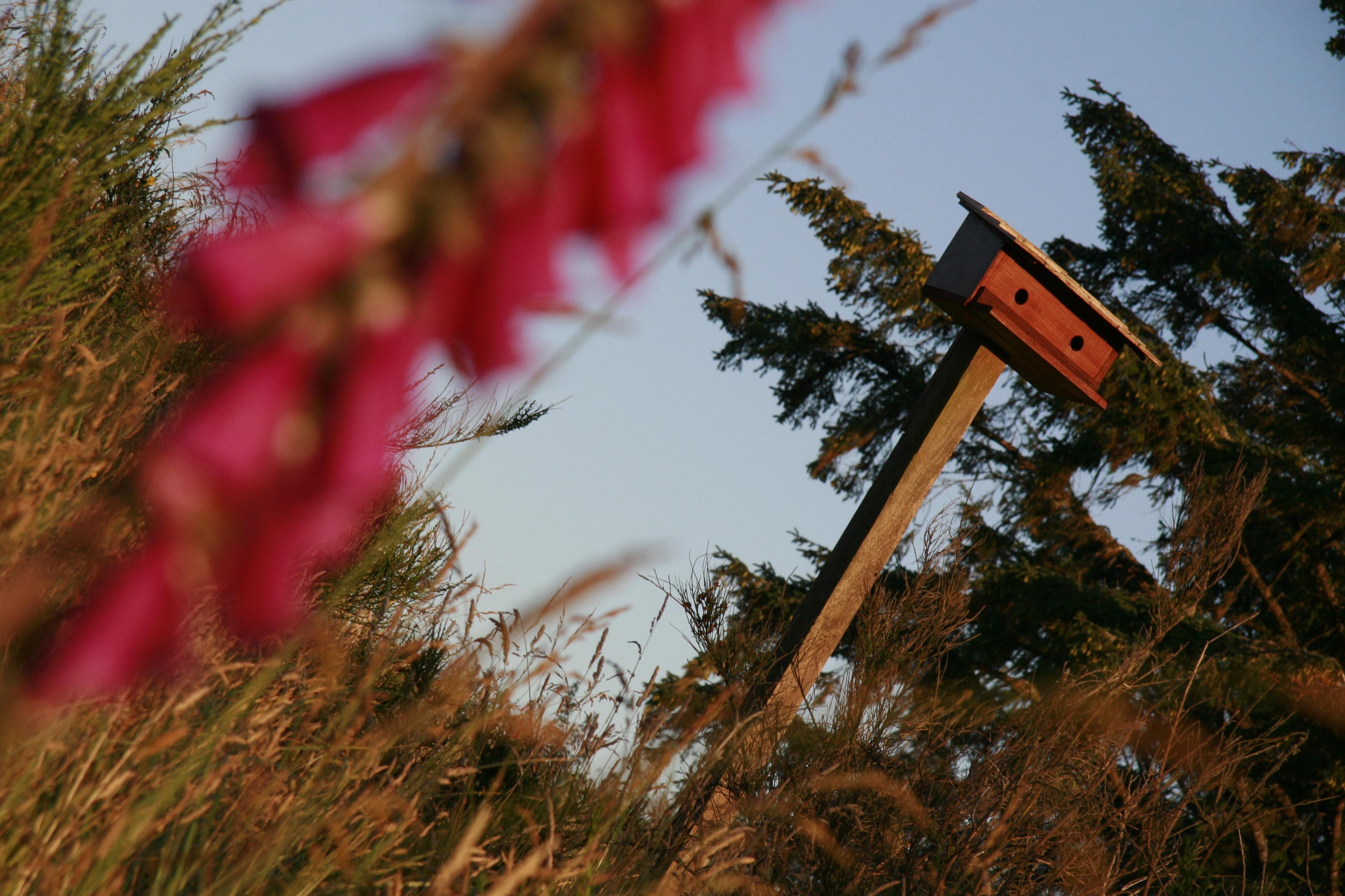 More birdhouses...