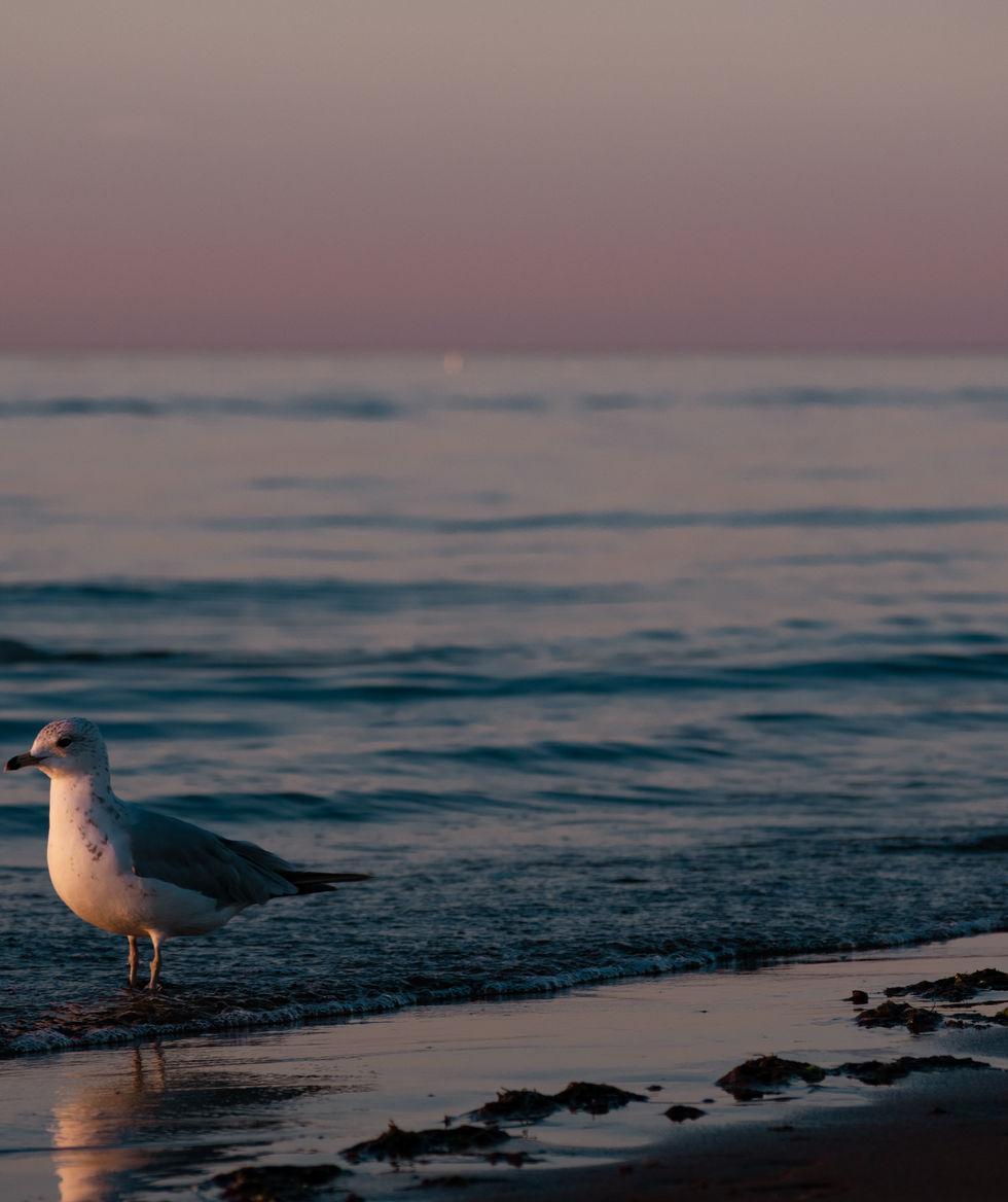 Sunset_Bird.jpg