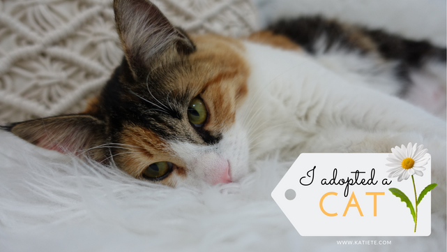Video | I adopted a cat!