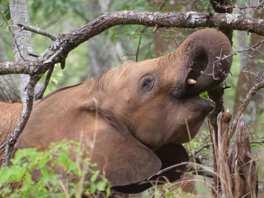 Understanding Elephant Emotions