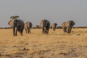 How and Why we Study Wild Herds