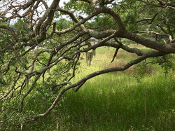 Living Pines @ Skull Creek SC SMc