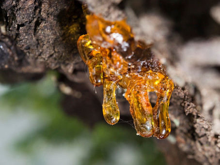 Frankincense Oil: The 'King' of Oils