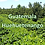 Thumbnail: Raw Green Guatemala Huehuetenango