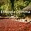 Thumbnail: Ethiopian Djimma