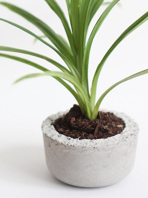 [001] Plant Bowl