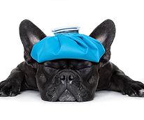 Schmertherapie Hunde