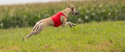 Sportmedizin Hunde