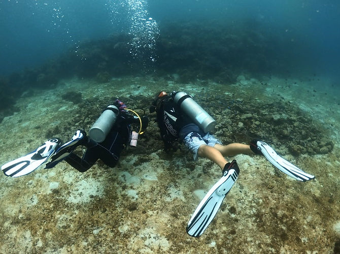 Propagation de corail nursery Anda Scuba Diving