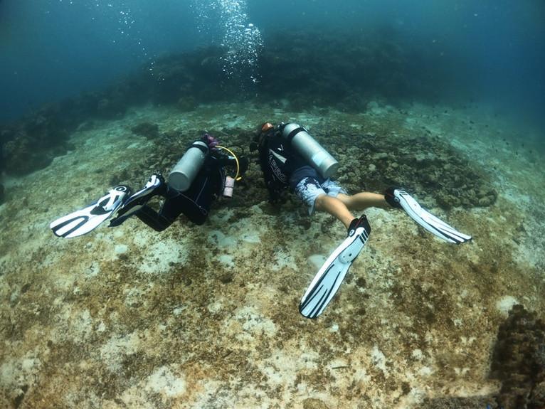 Notre nurserie de corail