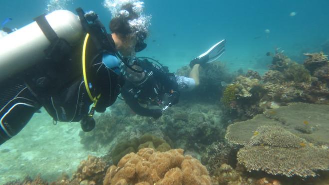 Identification du corail
