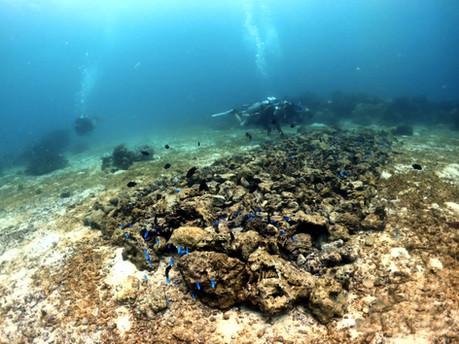 Nurserie de corail