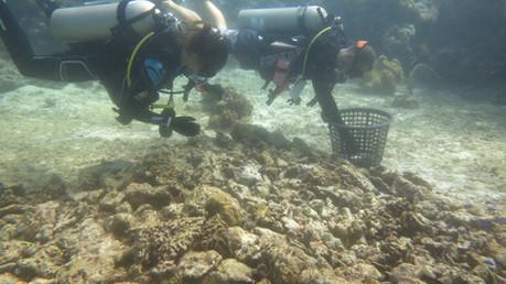 Remise à l'eau des boutures de corail