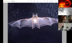 夜行性動物の画像