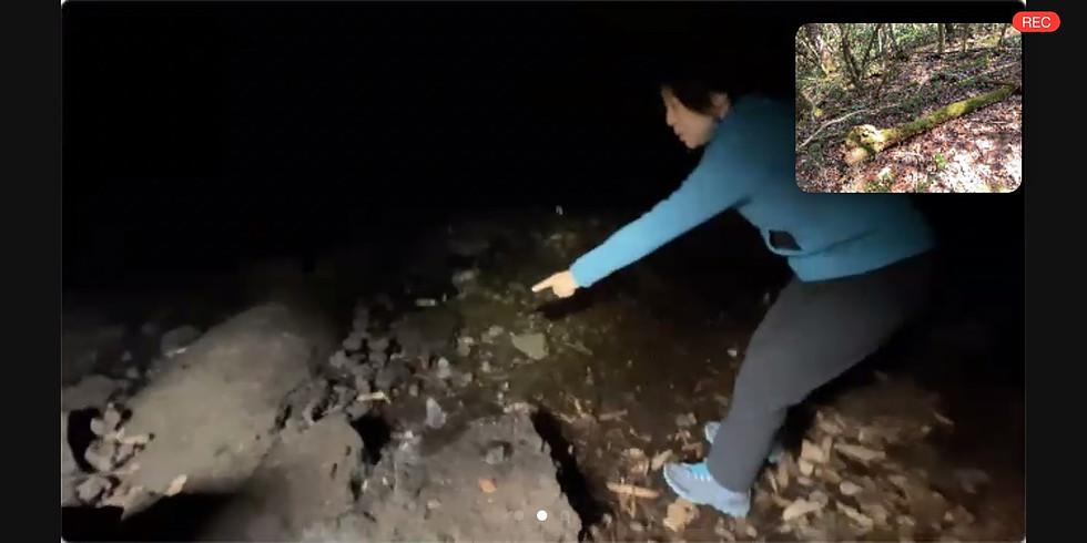 オンラインエコツアー(青木ヶ原樹海とその地下洞窟へ)