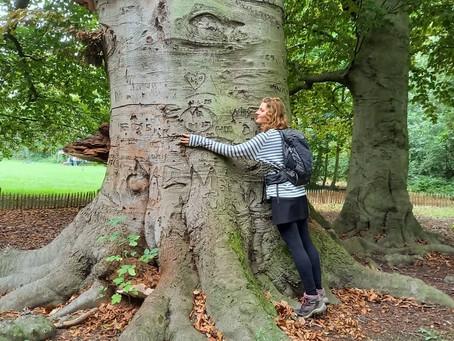 Connectie voelen met bomen
