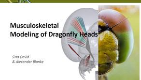 蜻蜓的肌肉骨骼模型