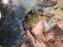 good frog copy.jpg