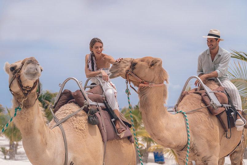EDM_Bungalow_Camel.jpg