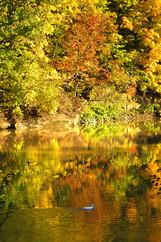 River Tree Reflection