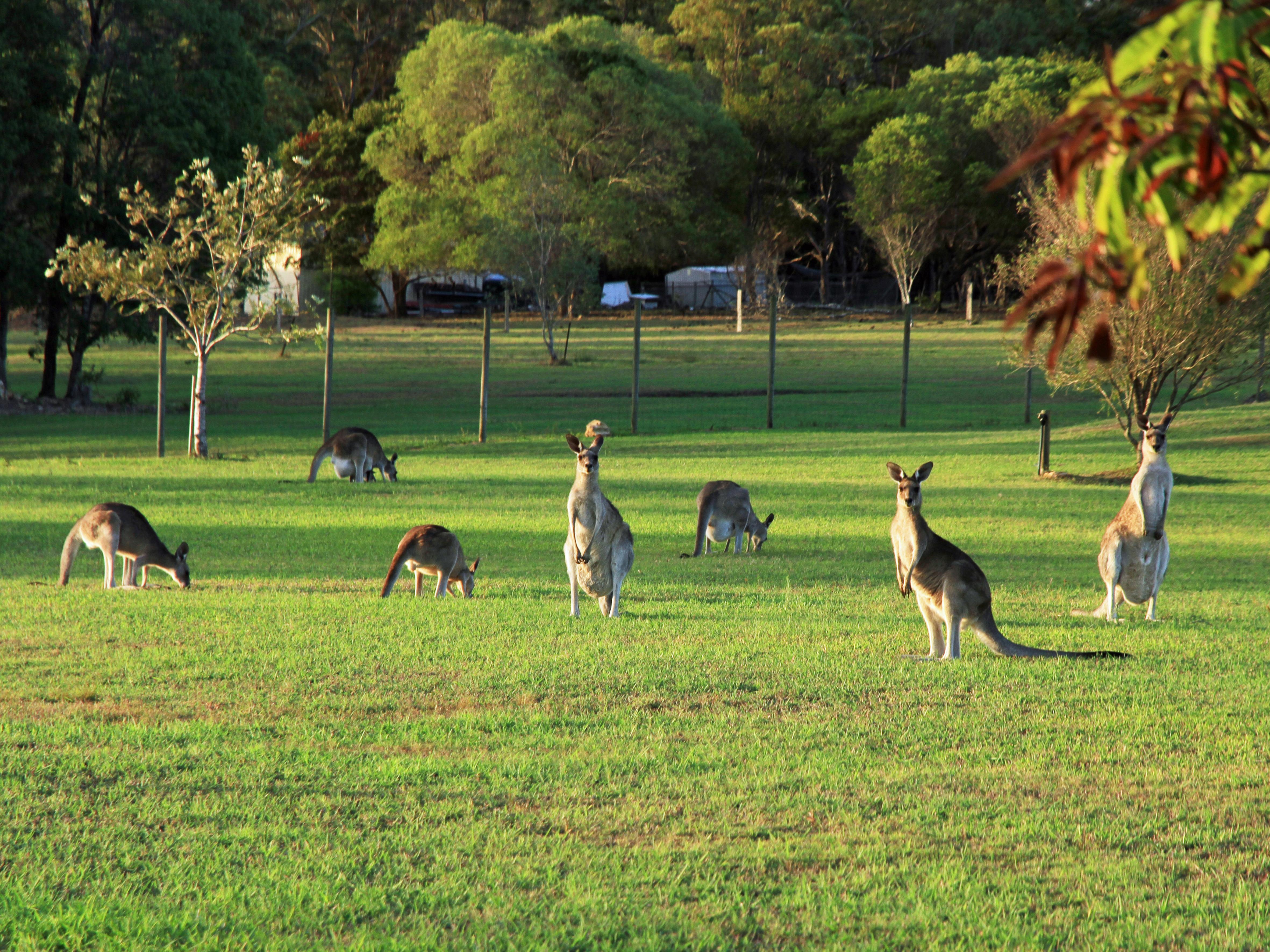 Aussie_4984-30x40