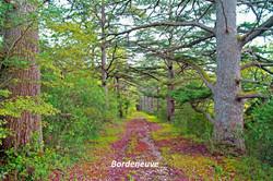 Bordeneuve-Saint-Créac © Gilles Nicoud