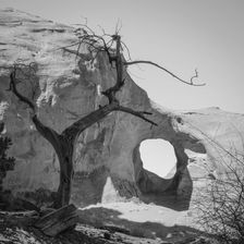 """Black and white urban and landscape photography. The 'Ear of the Wind"""", a naturally-formed hole in a wall of rock, framed by a bare tree in Monument Valley, Arizona, USA"""