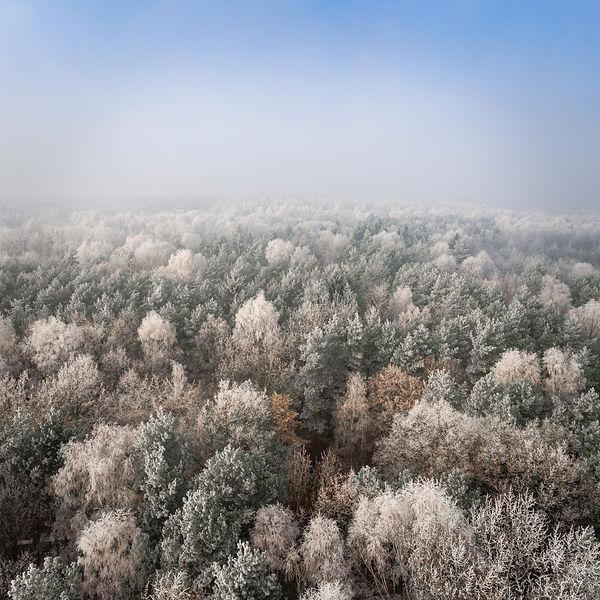 bosque_aérea.jpg