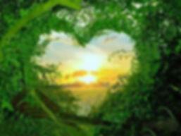 Qué-es-el-amor-a-la-naturaleza-.jpg