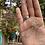 Thumbnail: AstroSun Centauri