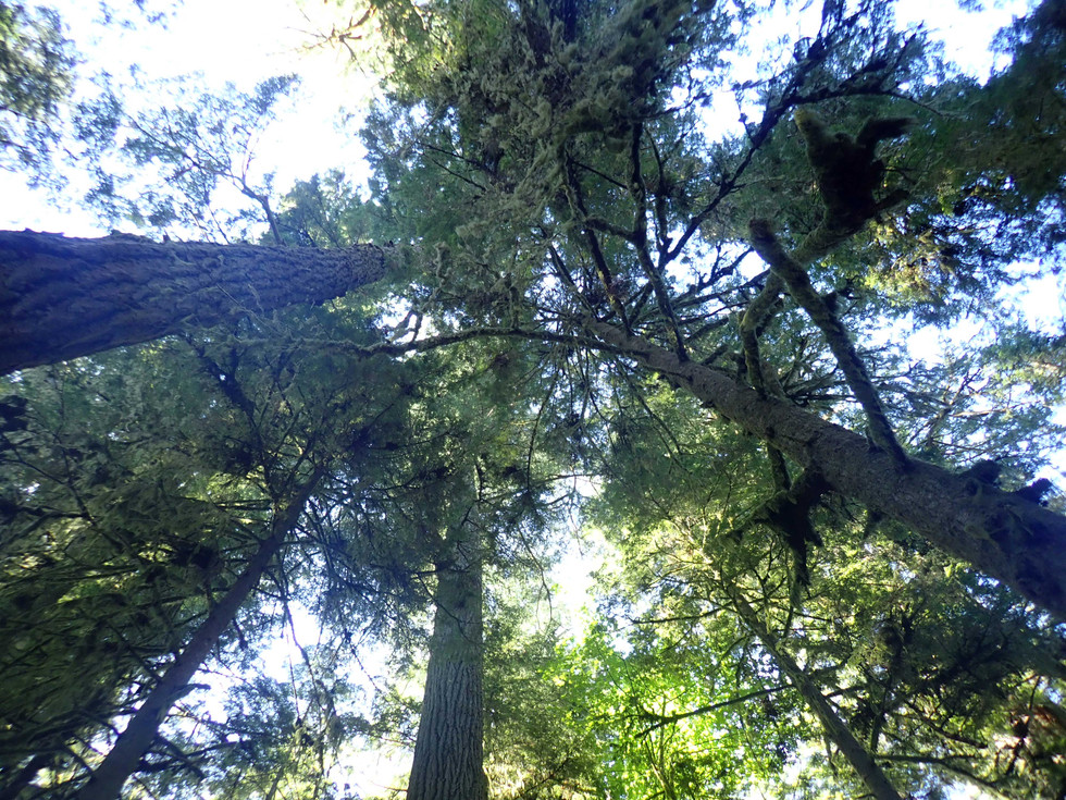 Land of Tall Trees