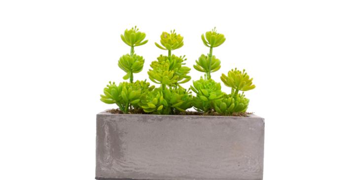 Deep Rectangle Planter